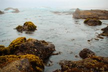 Point Lobos 023