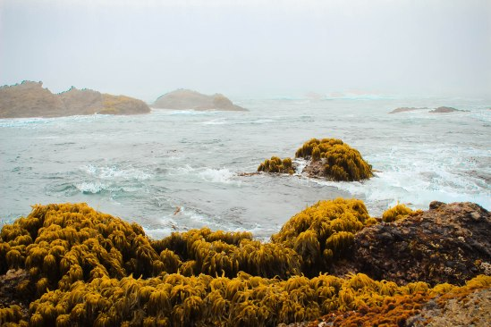 Point Lobos 031