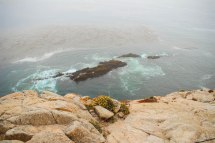 Point Lobos 047