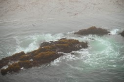 Point Lobos 050