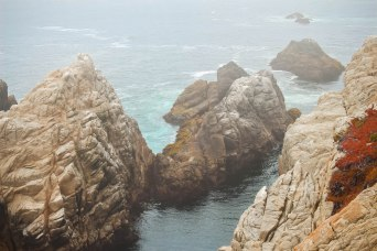 Point Lobos 054