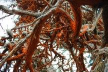 Point Lobos 084
