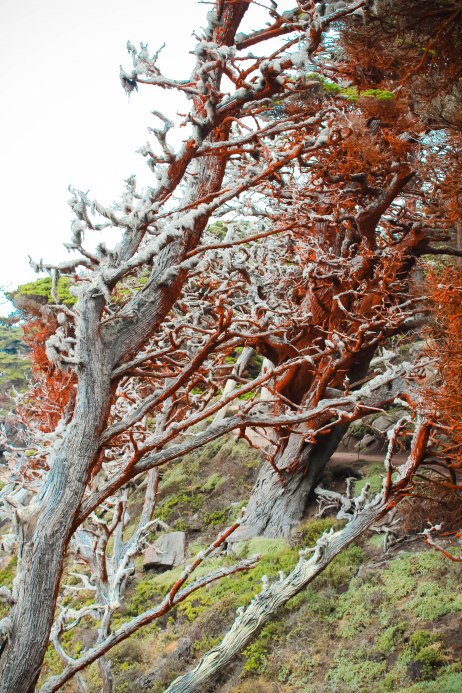 Point Lobos 086