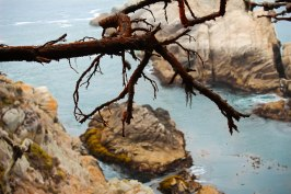 Point Lobos 088