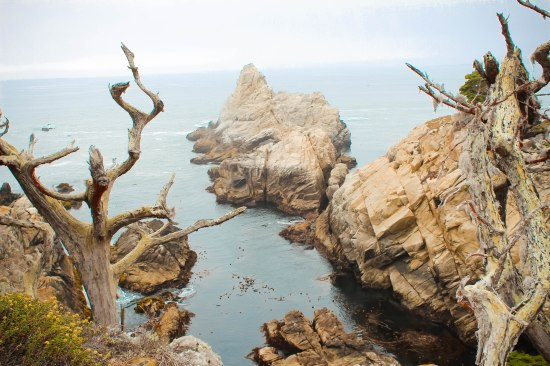 Point Lobos 089