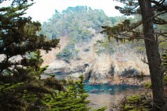 Point Lobos 091