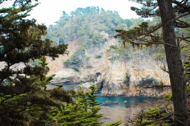 Point Lobos 091