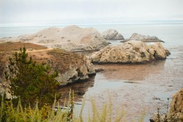 Point Lobos 105