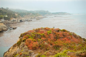 Point Lobos 110